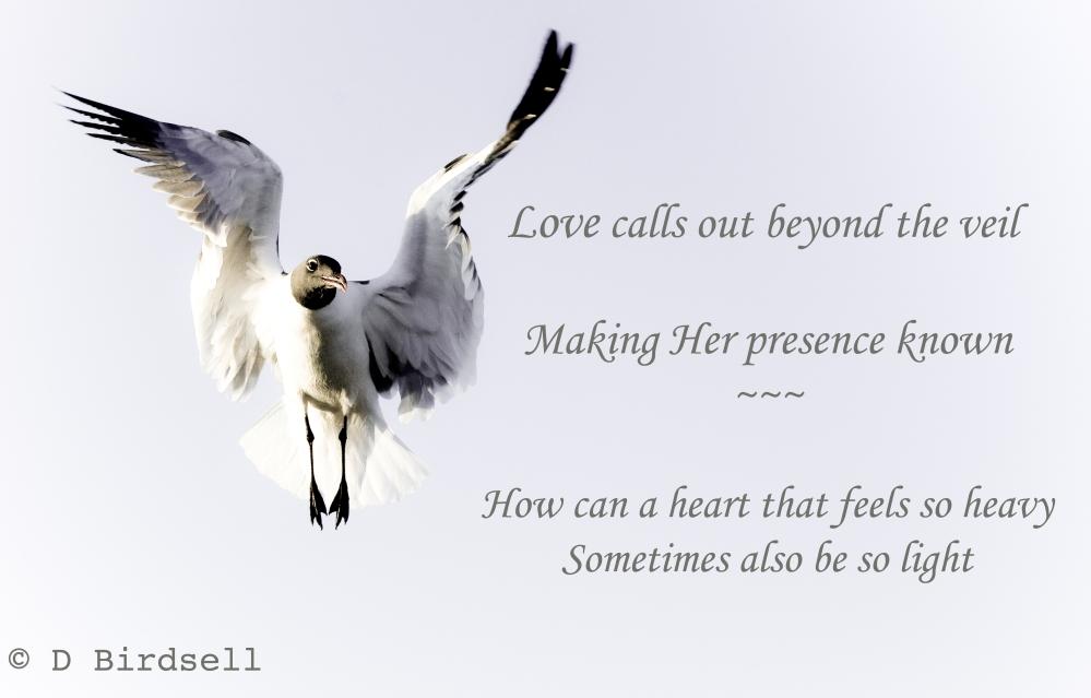 LoveStillSpeakingSnd