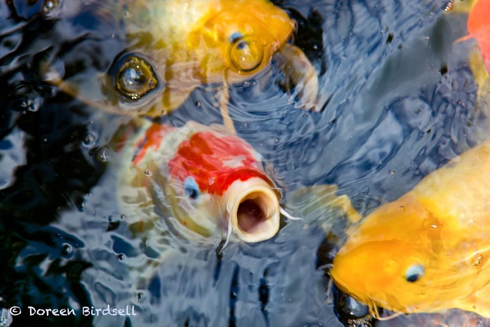 FBFish